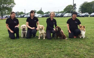 Chance Agility Team'S First Competition Of The Year