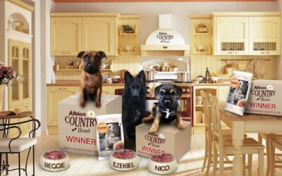 Puppy Commercial Winners
